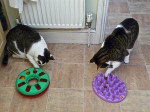 'We love to eat ... but here are 2 of life's puzzles: biscuits, but where?'