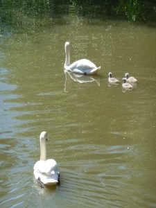 Swans dad goes to join family