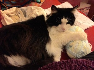 Moppet takes up knitting