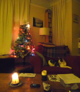 The Tree in today's front room ... (2014)