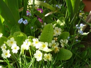 Hedgerow spring flowers